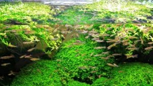 Best Aquarium Filters Reviews
