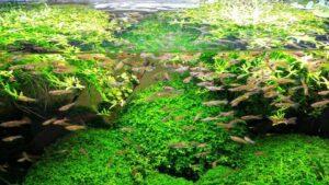 Best Aquarium Filters Reviews
