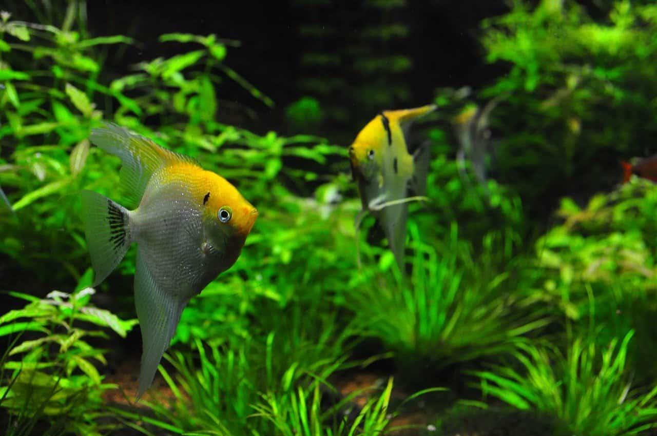 Freshwater Sump Filter