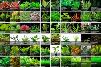 Quarantine Aquarium Plants