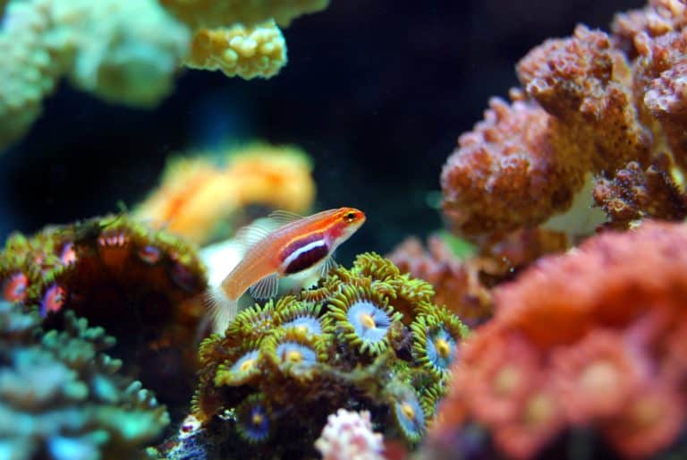 7 All In One Best Nano Reef Tank: Reviews, Side by Side Comparison & Buyer's Guide