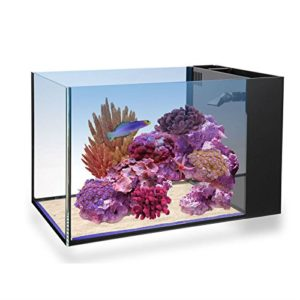 Innovative Marine Fusion Peninsula 14 Gallon