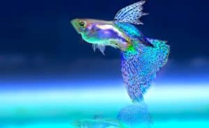 best aquarium heater reviews 2019 top picks buyer s guide