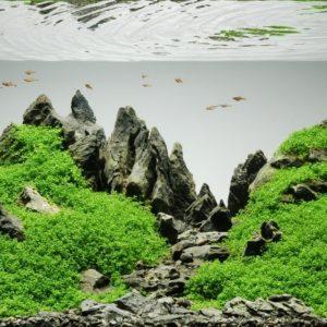 Best Light for Aquarium Plants