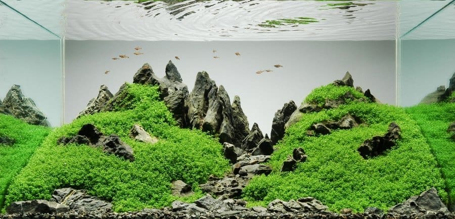Best Light for Aquarium Plants