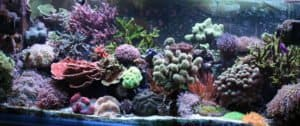 Best Reef Salt Review