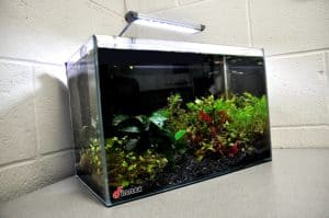 Finnex FugeRay Planted+ Aquarium LED Light Plus Moonlights Review