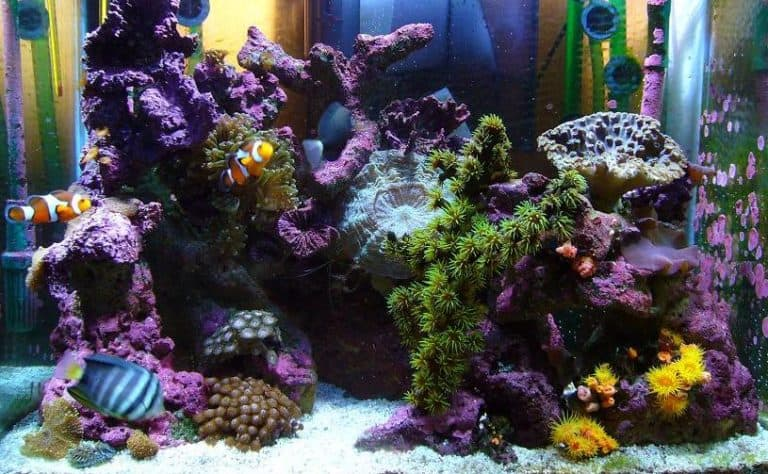 Coralife Biocube 32 Review & Upgrades: Unleash All Potentials To Your Reef Journey