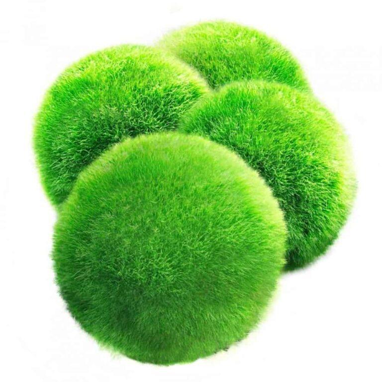 Marimo Moss Ball Care and Benefits