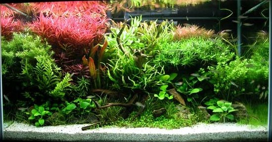 How to Adjust the Lighting for Your Freshwater/Saltwater Aquarium
