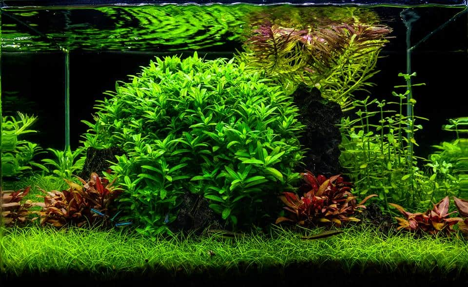 Aquascape Dutch Style