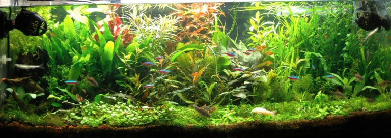 Fluval CO2 Kit Review: Can We Rely on This Pressurized CO2 System?