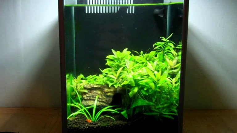 Fluval Spec III Review – Betta or Shrimp Tank