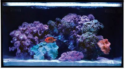 Nuvo Fusion 20 Review: The 20 Gallon (Or 10 Gallon) Rimless Aquarium Started Kit For Reef