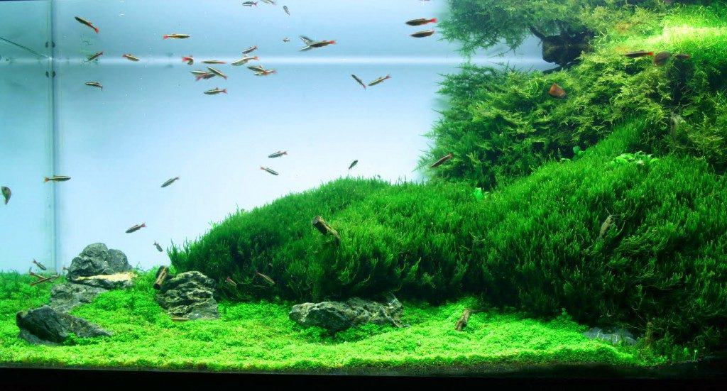 Aquarium Carpet Plants