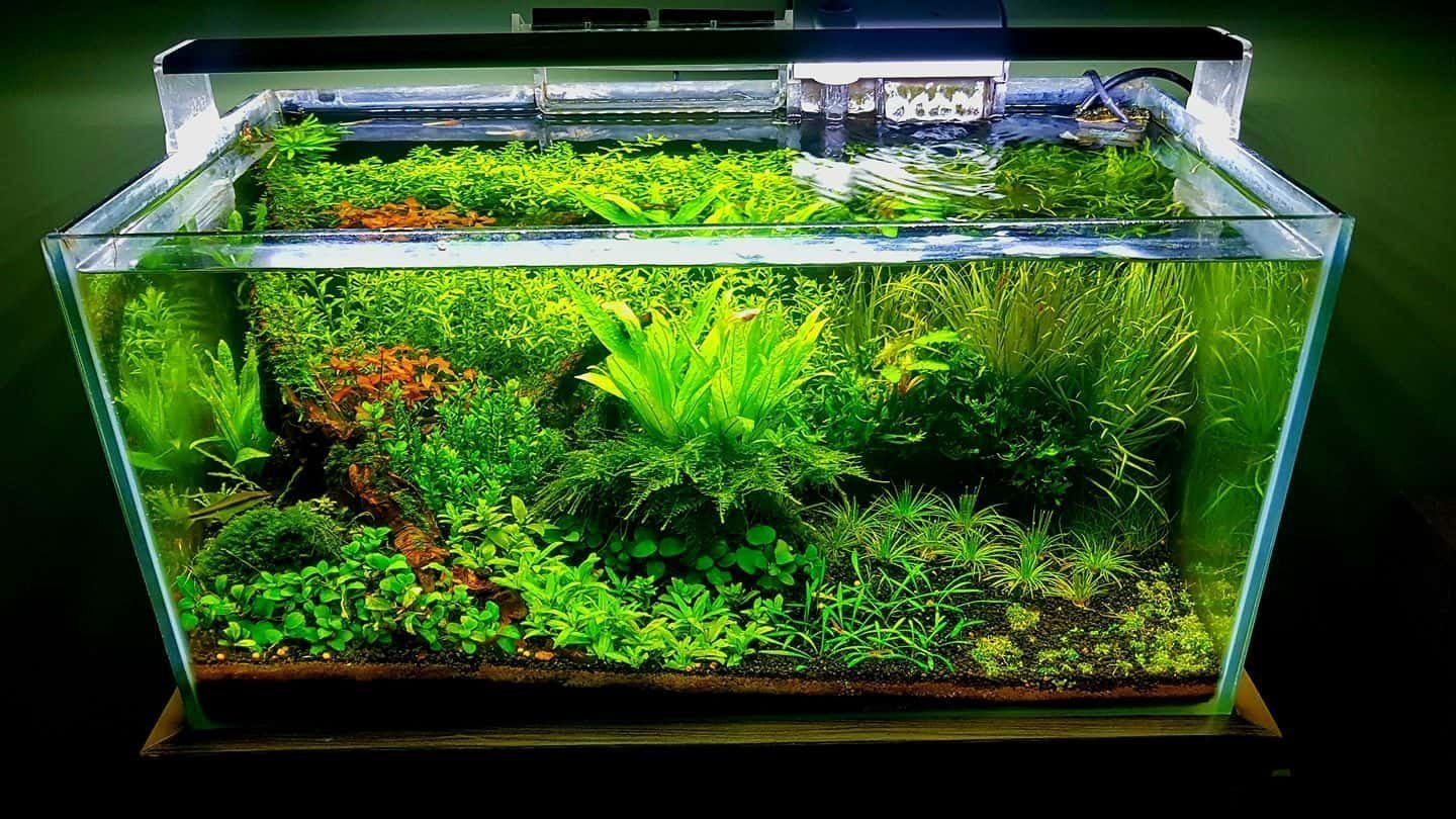 Fish Tank Aquascape Designs