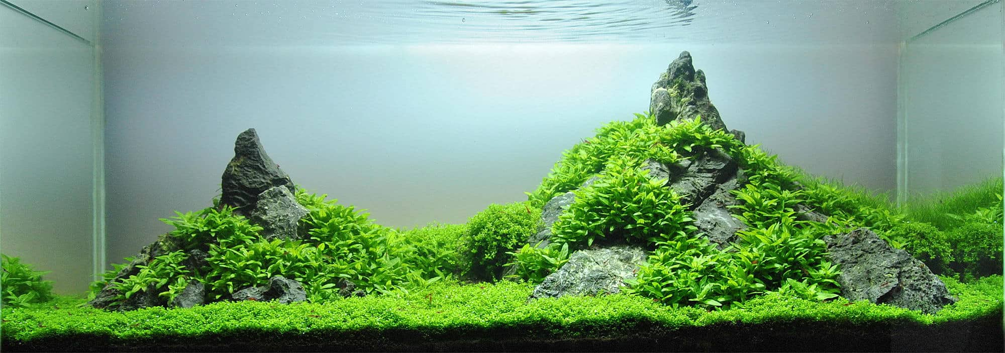 Carpeting Plants Without CO2: Step by Step Guide (updated)