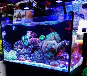 Kessil A80 Tuna Blue LED Light Review