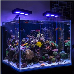 Best LED Reef Light
