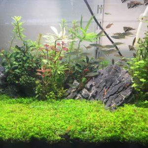 UV Sterilizer for Freshwater Aquarium