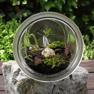best plants for terrarium
