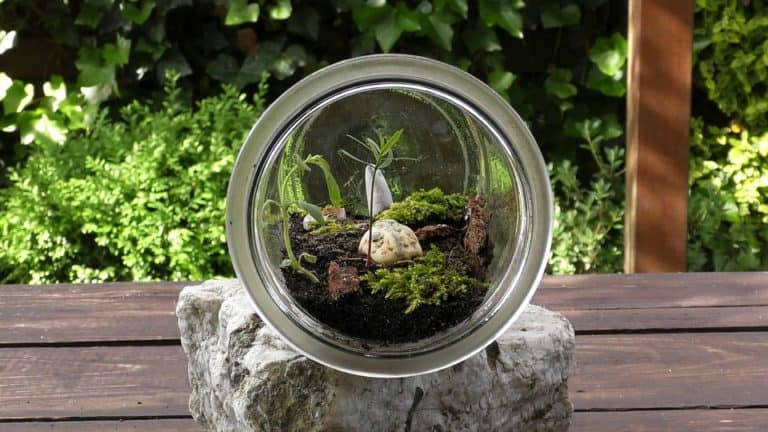 Best Plants For Terrarium to Kick-start Your Indoor Garden