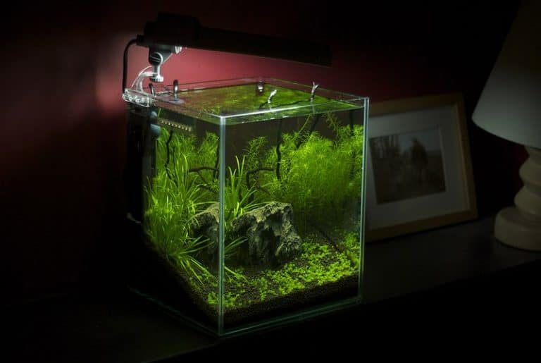 Best Filter For 10 Gallon Tank: Our Top Pick, Reviews & Comparison
