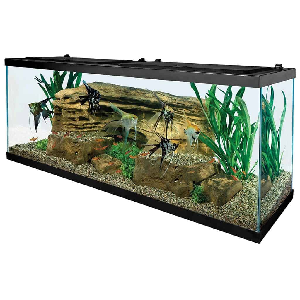 Tetra 55 Gallon Aquarium Kit