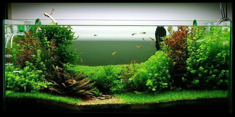 Best 20 Gallon Fish Tank: Aquarium Starter Kit Reviews, Buyer's Guide & Setup Ideas