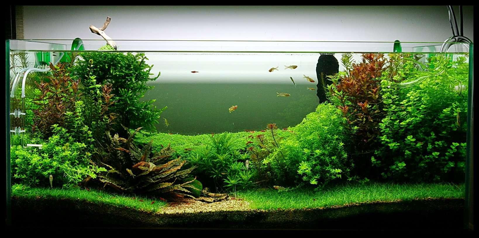 best 20 gallon fish tank