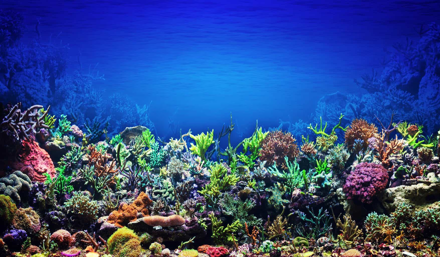 saltwater and reef aquarium