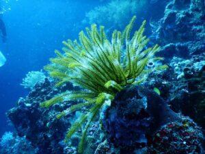 How To Cycle Saltwater Reef Aquarium