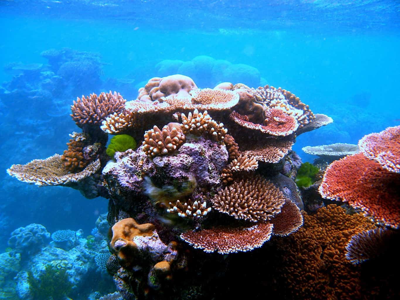 How To Acclimate Corals