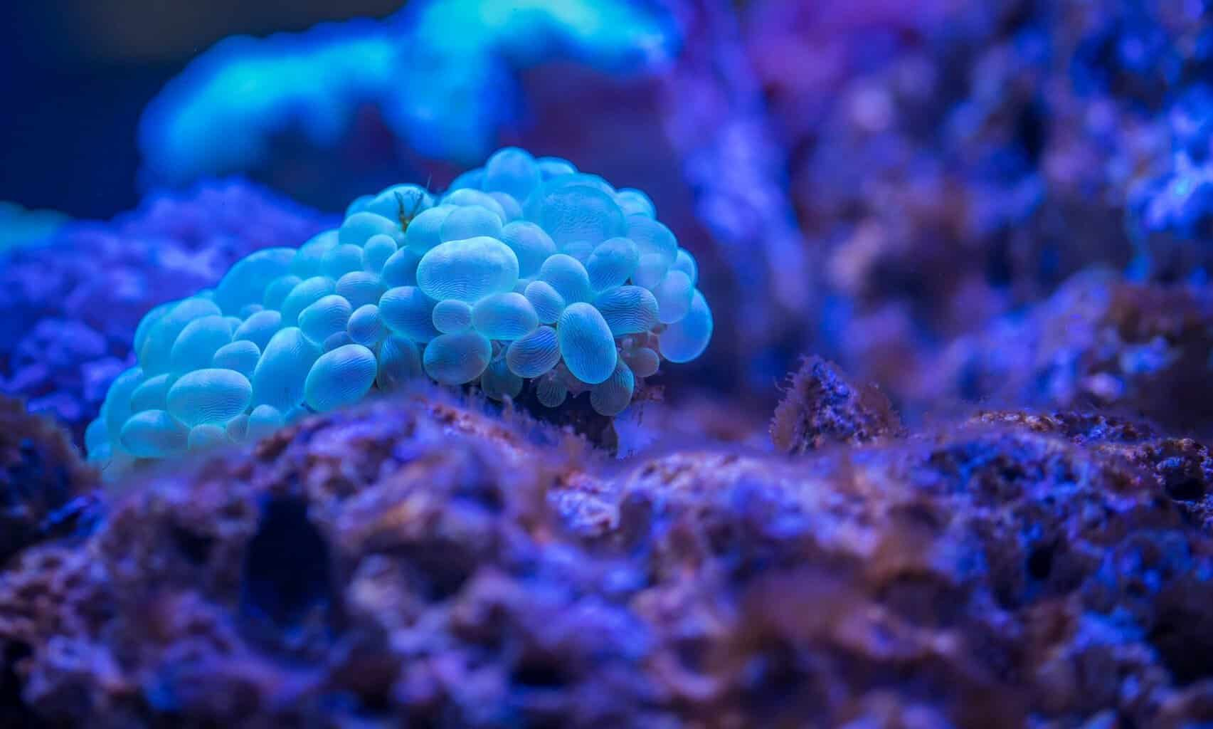 How To Mix Saltwater For Reef Aquarium
