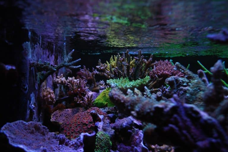 Top 5 Best SPS Corals For Beginners: How Can You Keep Them Successfully in Your Home Aquarium