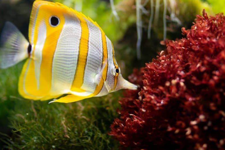 Best Reef Safe Fish: What Fishes to Select for Your Saltwater Aquarium