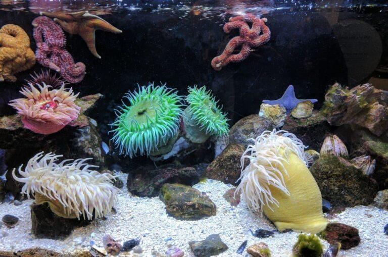 Top 5 Best Sand for Saltwater Aquarium: Comprehensive Guide (Comparison + Reviews)