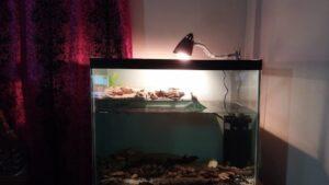 Best Turtle Tank Filter