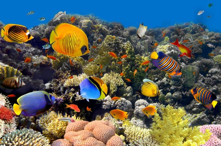 10 Best Saltwater Fish For Beginners