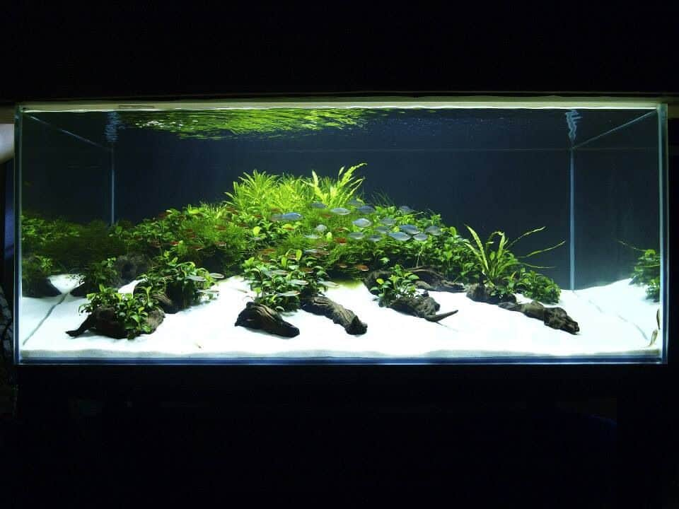 Best Sand For Freshwater Aquarium