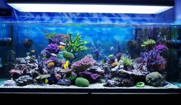 How to Cure Live Rock for Your Saltwater Aquarium Or Reef Tank