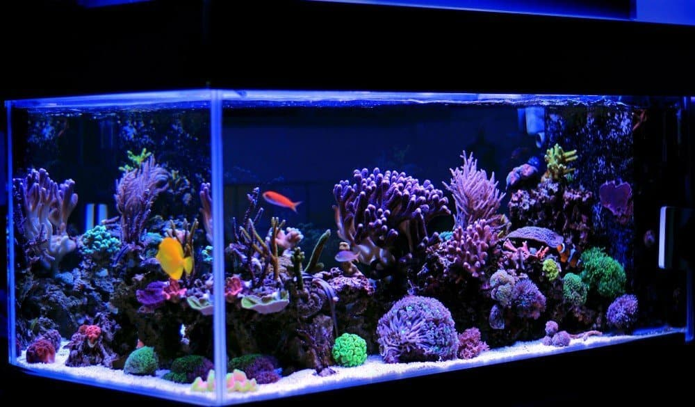 Refugium For Saltwater Tank