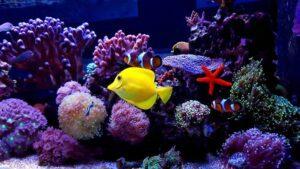 Aquarium Wave Maker