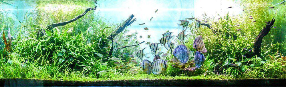 Best Wavemaker For Aquarium