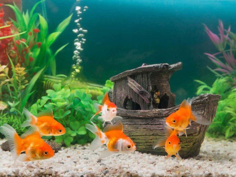 8 Best Aquarium Air Stones & Bubblers To Buy in 2021