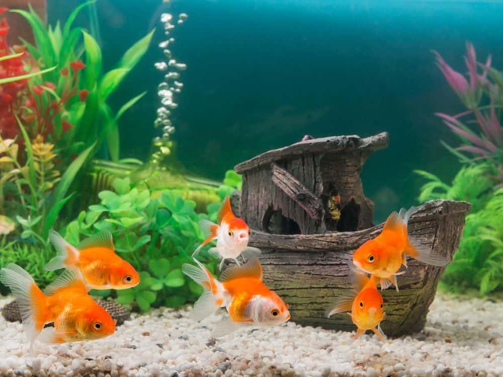 Best Aquarium Air Stones