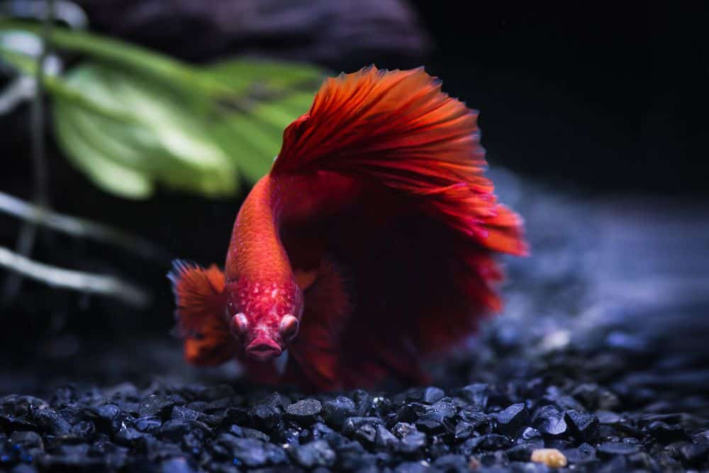 Best Heaters For Betta Tank
