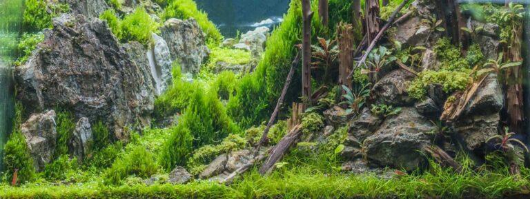 5 Best Aquarium CO2 Regulator For Planted Tank (Comparison, Reviews & Buyer's Guide)