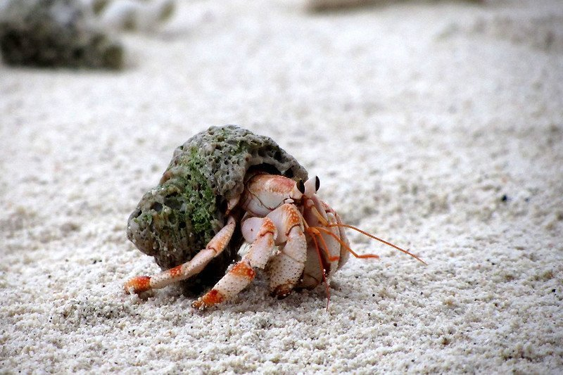 Best Substrate For Hermit Crab