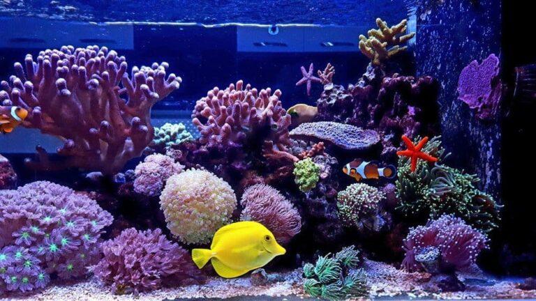 Top 4 Best Calcium Reactors For Reef Aquarium In 2021 (Reviews & Comprehensive Buyer's Guide)